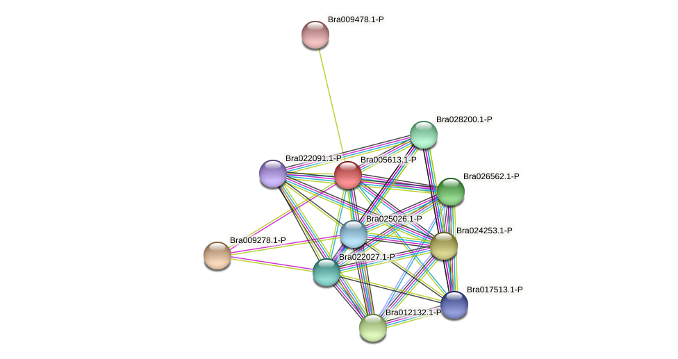 Bra005613 protein (Brassica rapa) - STRING interaction network