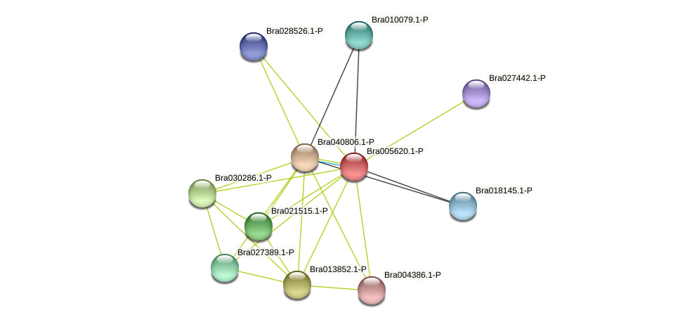 Bra005620 protein (Brassica rapa) - STRING interaction network