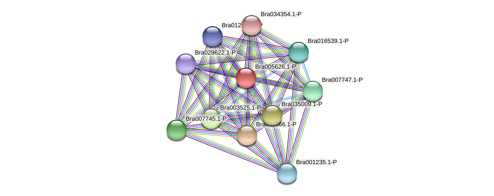 Bra005626 protein (Brassica rapa) - STRING interaction network