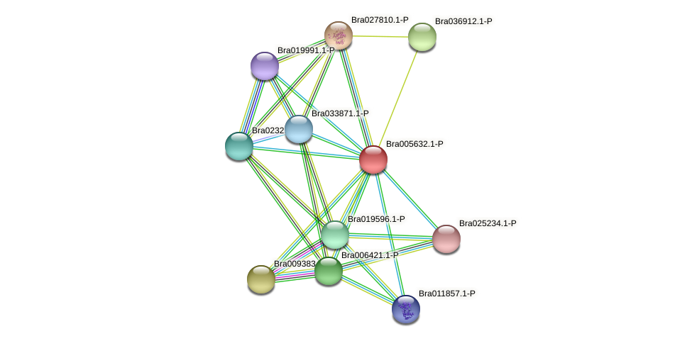 Bra005632 protein (Brassica rapa) - STRING interaction network