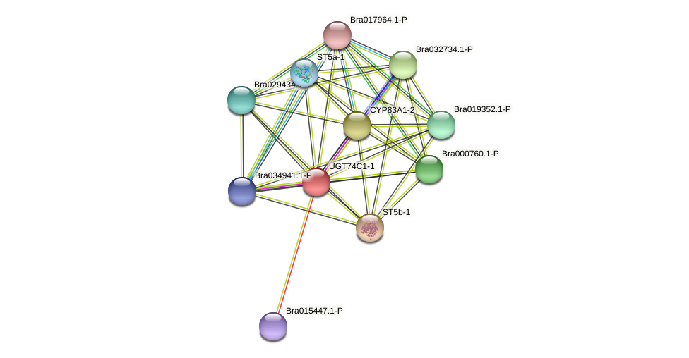 Bra005641 protein (Brassica rapa) - STRING interaction network