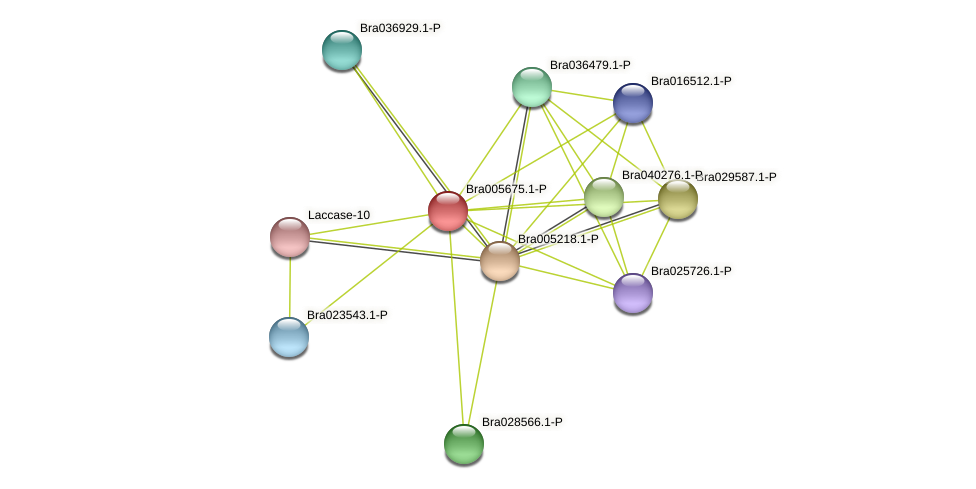 Bra005675 protein (Brassica rapa) - STRING interaction network