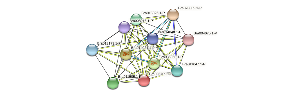 Bra005709 protein (Brassica rapa) - STRING interaction network