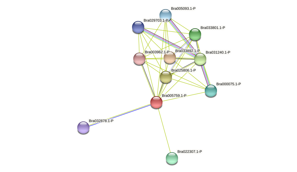 Bra005759 protein (Brassica rapa) - STRING interaction network