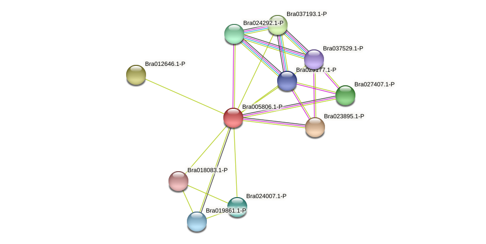 Bra005806 protein (Brassica rapa) - STRING interaction network