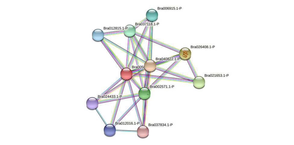 Bra005815 protein (Brassica rapa) - STRING interaction network