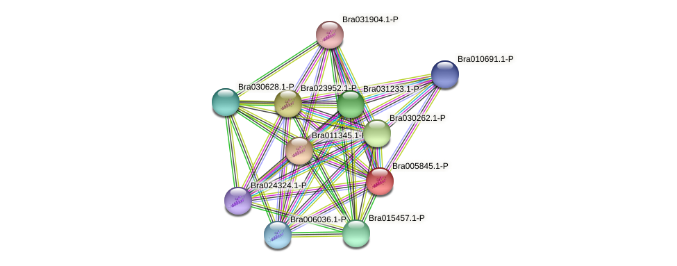 Bra005845 protein (Brassica rapa) - STRING interaction network