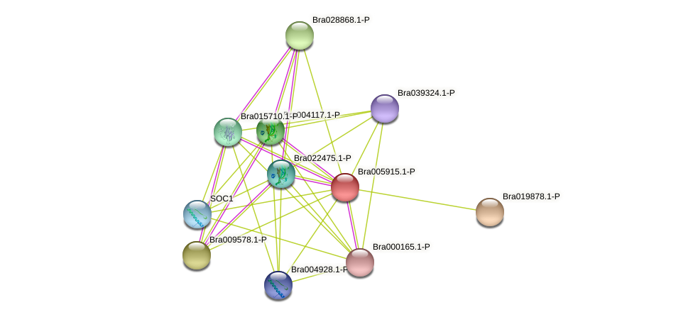 Bra005915 protein (Brassica rapa) - STRING interaction network