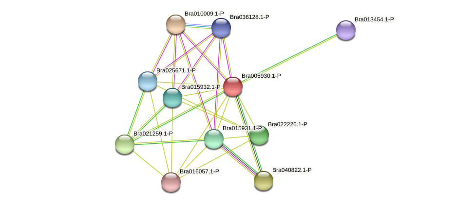 Bra005930 protein (Brassica rapa) - STRING interaction network
