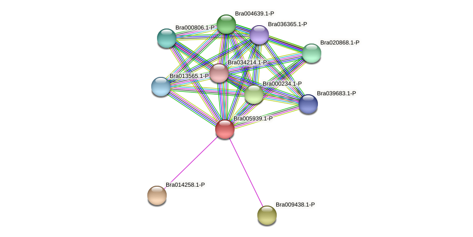 Bra005939 protein (Brassica rapa) - STRING interaction network