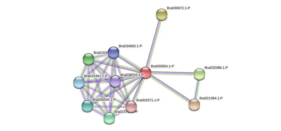 Bra005954 protein (Brassica rapa) - STRING interaction network