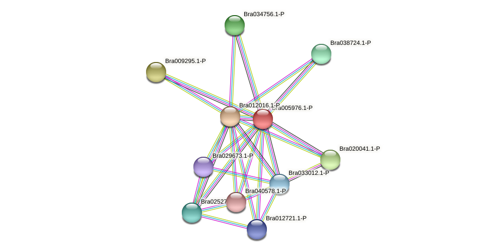 Bra005976 protein (Brassica rapa) - STRING interaction network