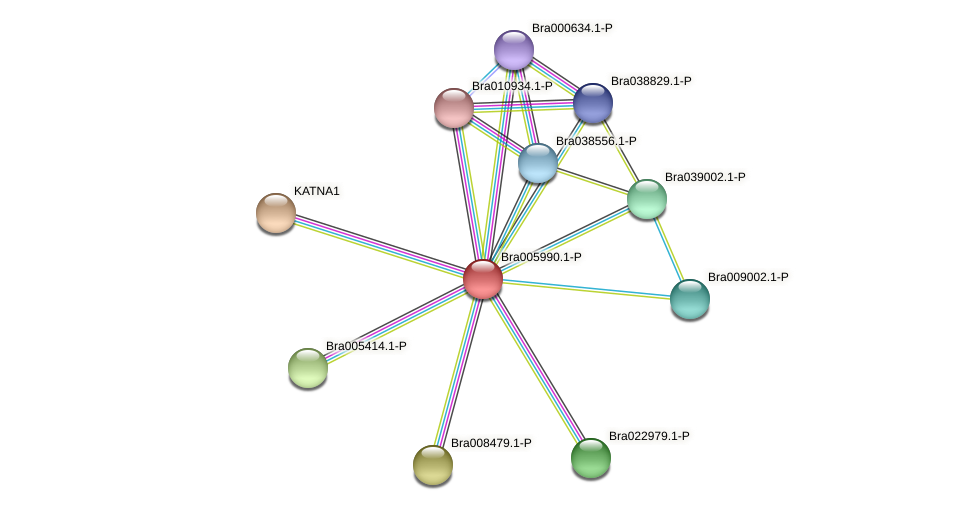 Bra005990 protein (Brassica rapa) - STRING interaction network