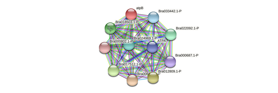 Bra006013 protein (Brassica rapa) - STRING interaction network
