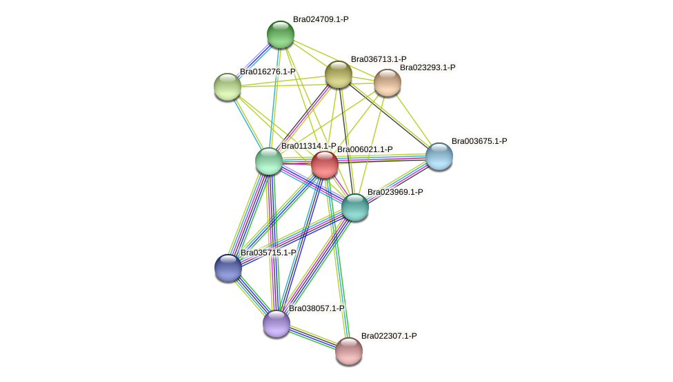 Bra006021 protein (Brassica rapa) - STRING interaction network
