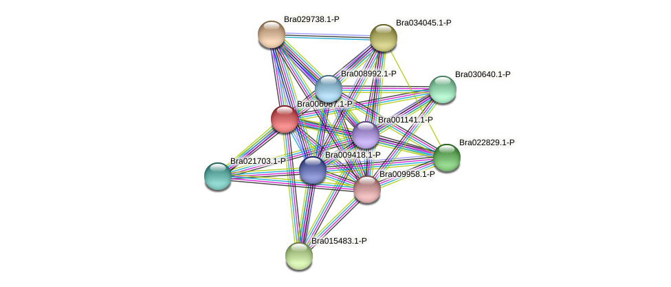 Bra006087 protein (Brassica rapa) - STRING interaction network