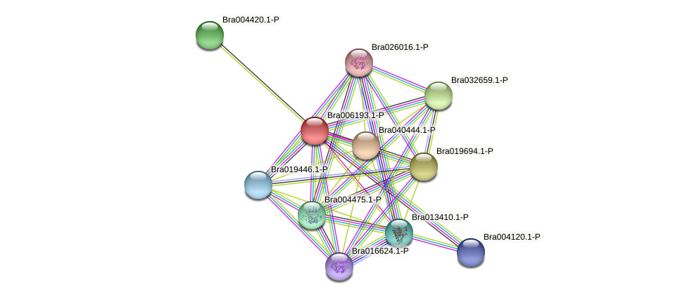 Bra006193 protein (Brassica rapa) - STRING interaction network