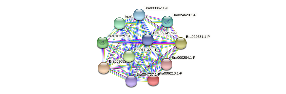 Bra006210 protein (Brassica rapa) - STRING interaction network