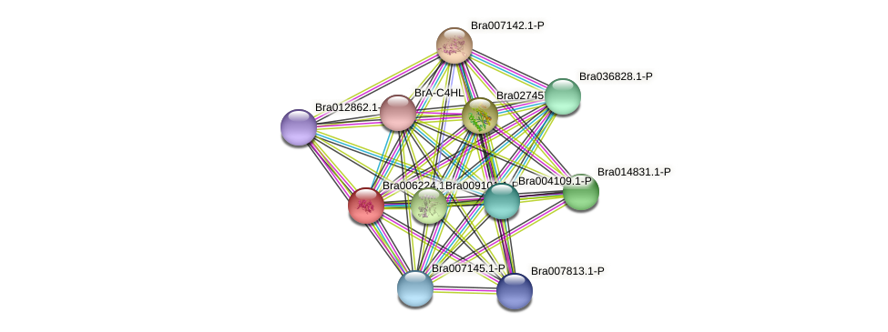 Bra006224 protein (Brassica rapa) - STRING interaction network