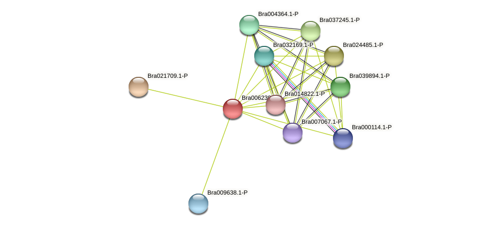 Bra006230 protein (Brassica rapa) - STRING interaction network