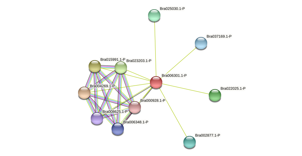 Bra006301 protein (Brassica rapa) - STRING interaction network