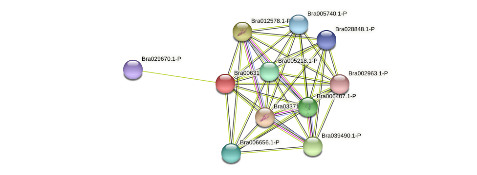 Bra006313 protein (Brassica rapa) - STRING interaction network