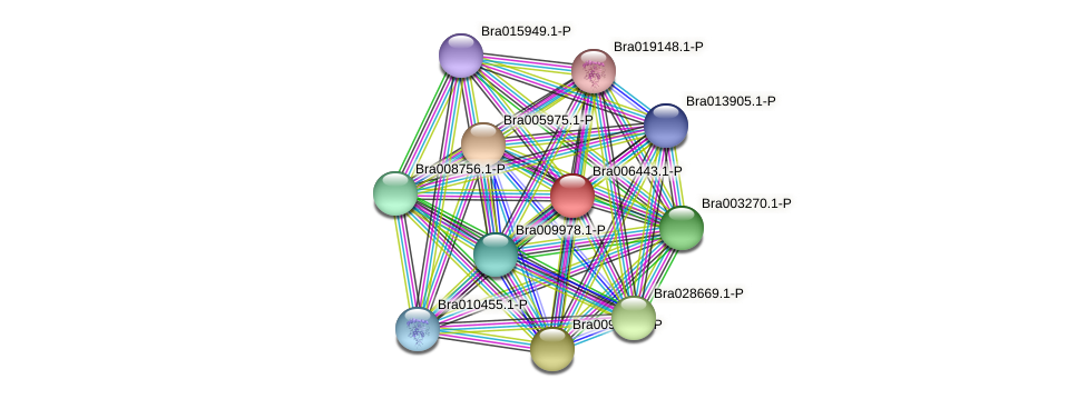 Bra006443 protein (Brassica rapa) - STRING interaction network