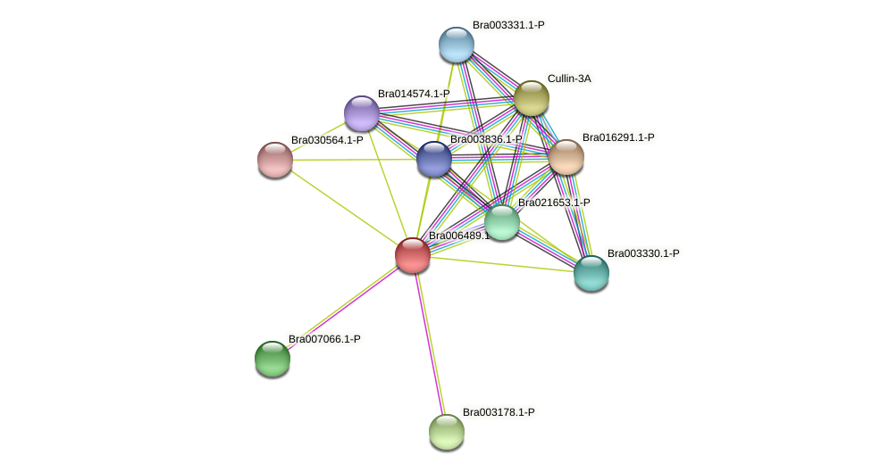 Bra006489 protein (Brassica rapa) - STRING interaction network