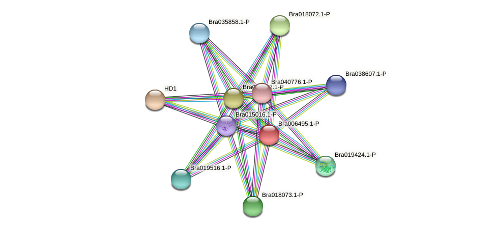 Bra006495 protein (Brassica rapa) - STRING interaction network