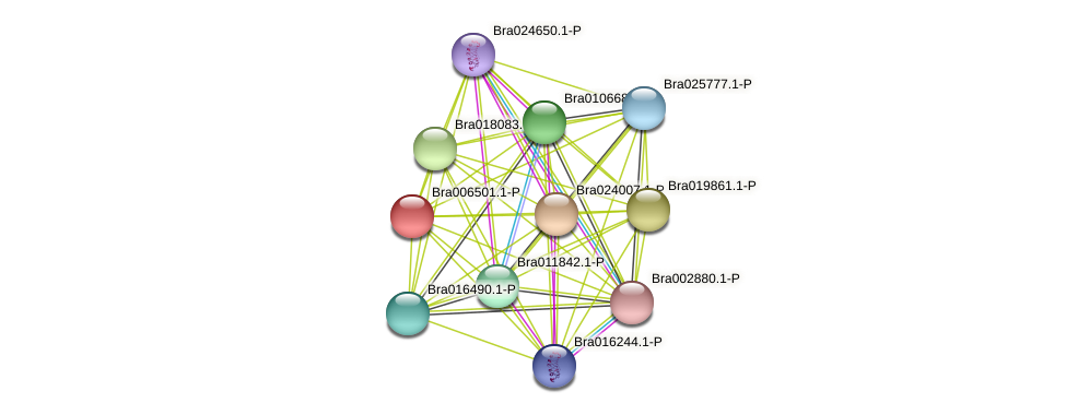 Bra006501 protein (Brassica rapa) - STRING interaction network