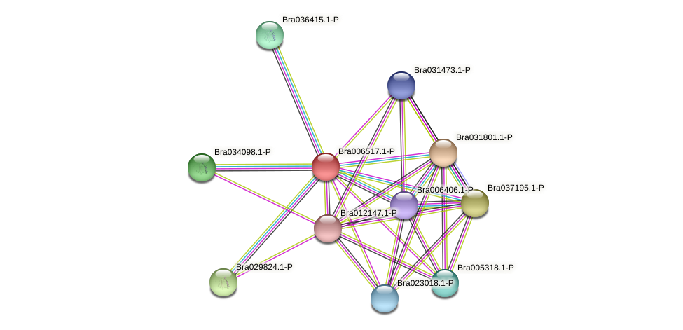 Bra006517 protein (Brassica rapa) - STRING interaction network
