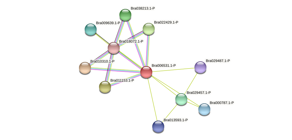 Bra006531 protein (Brassica rapa) - STRING interaction network