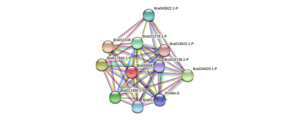 Bra006687 protein (Brassica rapa) - STRING interaction network