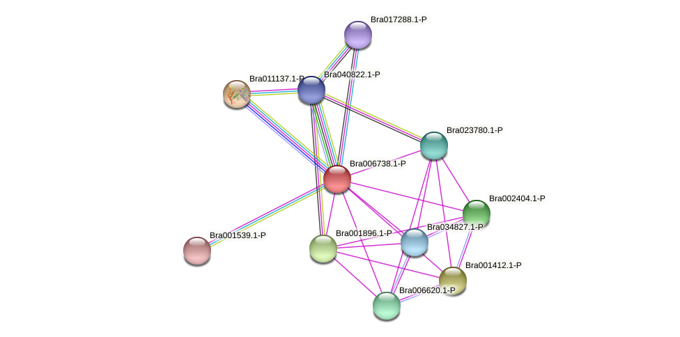 Bra006738 protein (Brassica rapa) - STRING interaction network