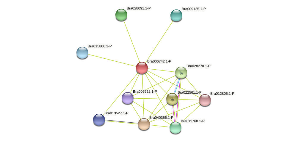 Bra006742 protein (Brassica rapa) - STRING interaction network