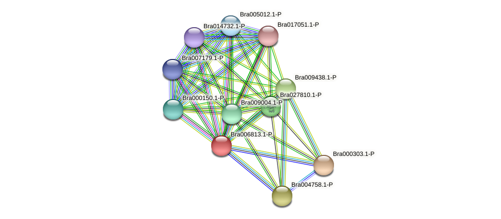 Bra006813 protein (Brassica rapa) - STRING interaction network