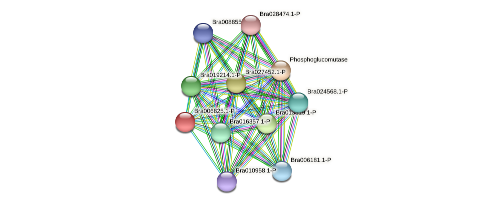 Bra006825 protein (Brassica rapa) - STRING interaction network