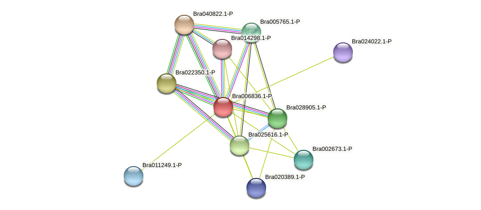 Bra006836 protein (Brassica rapa) - STRING interaction network