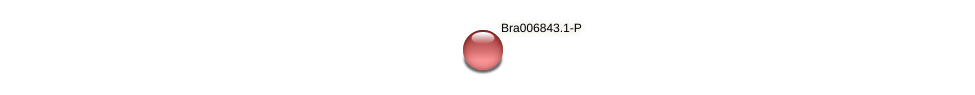 Bra006843 protein (Brassica rapa) - STRING interaction network