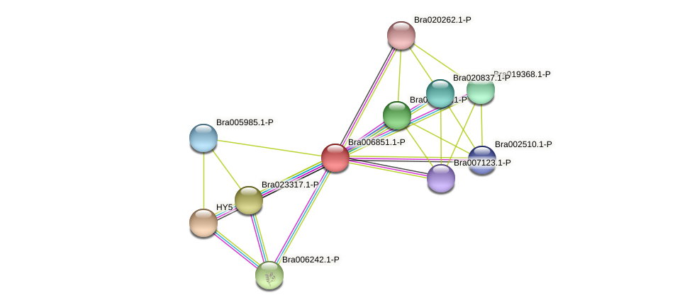 Bra006851 protein (Brassica rapa) - STRING interaction network