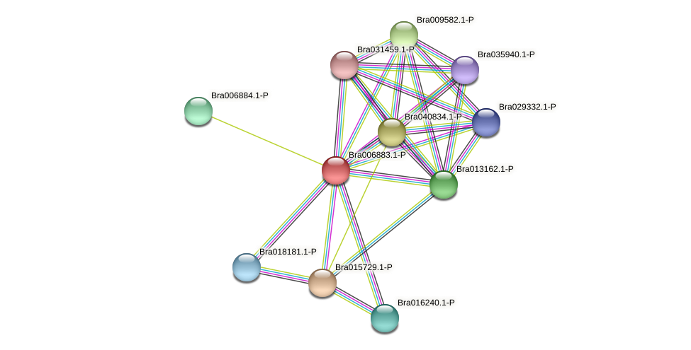 Bra006883 protein (Brassica rapa) - STRING interaction network