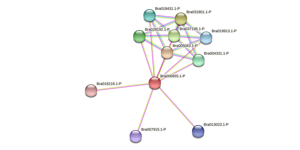 Bra006955 protein (Brassica rapa) - STRING interaction network