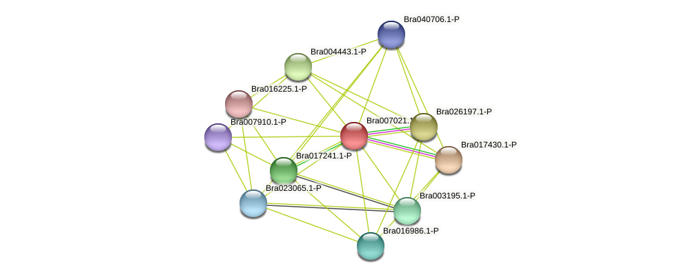 Bra007021 protein (Brassica rapa) - STRING interaction network