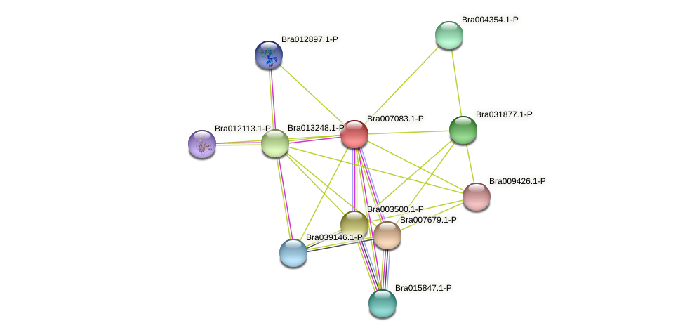 Bra007083 protein (Brassica rapa) - STRING interaction network