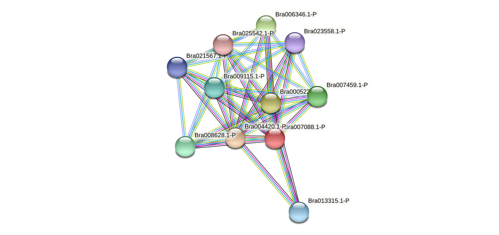Bra007088 protein (Brassica rapa) - STRING interaction network