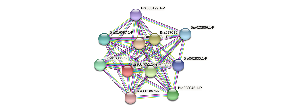 Bra007092 protein (Brassica rapa) - STRING interaction network