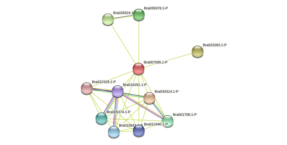Bra007095 protein (Brassica rapa) - STRING interaction network