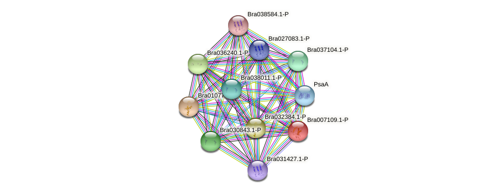 Bra007109 protein (Brassica rapa) - STRING interaction network