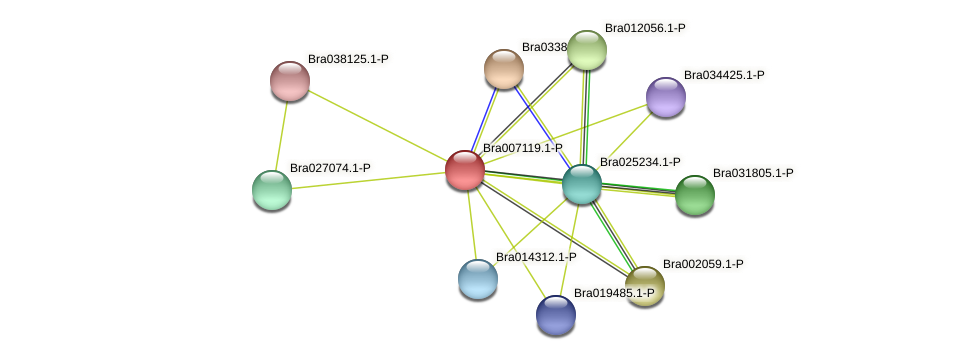 Bra007119 protein (Brassica rapa) - STRING interaction network