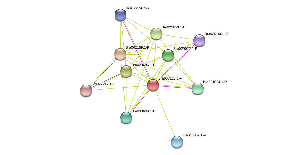 Bra007125 protein (Brassica rapa) - STRING interaction network